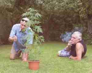 Trasplante capilar para fumadores de marihuana 1